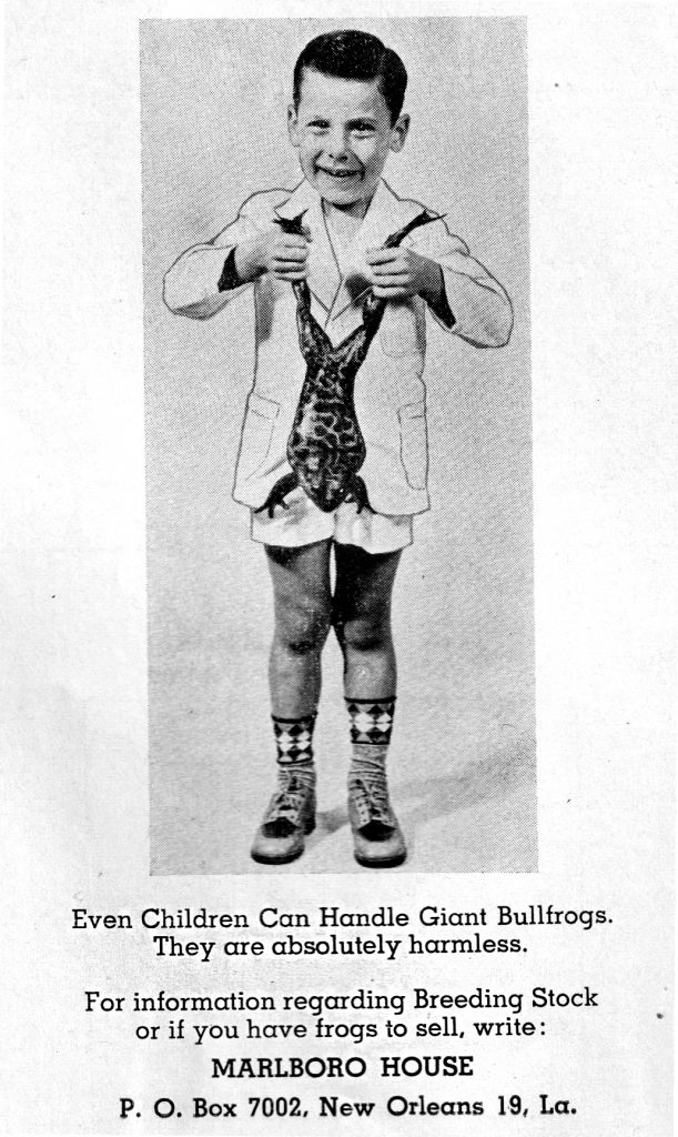 """A black and white photo of a light-skinned child holding a frog upside down by its back legs. The child is wearing a light, formal jacket, light shorts, and dress shoes with long, patterned socks. Their hair is short and slicked back, and they're smiling. The bottom reads """"Every child can handle giant bullfrogs. They're absolutely harmless. For information regarding breeding stock or if you have frogs to sell, write: Marlboro House P.O. Box 7002 New Orleans 19, La."""""""