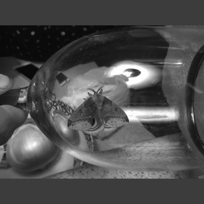 Album cover for Apophenia by Laura Fisher. It's a black and white photo of a moth inside of a glass container. There are other things in the background, but the photo is so close up that it's hard to make them out, which seems to be intentionally disorienting.