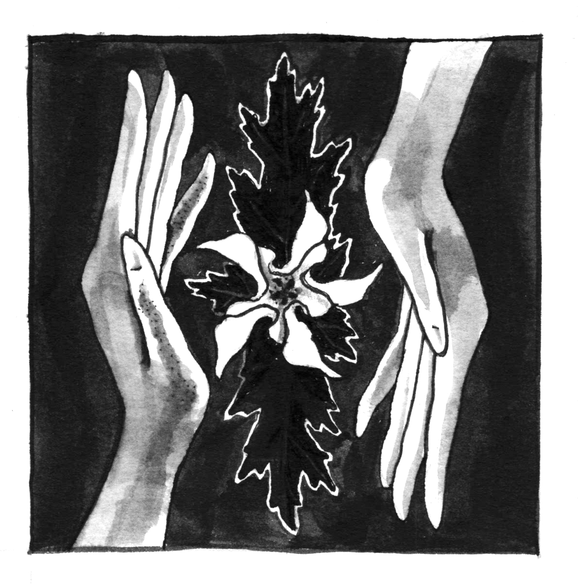 A grayscale illustration of two hands opposite another with a flower in between them. The hand on the left is facing up and the hand on the right is facing down. The flower in the middle is white and the leaves around it are dark. The background is dark gray. Illustration by Artemesia Trapeze.